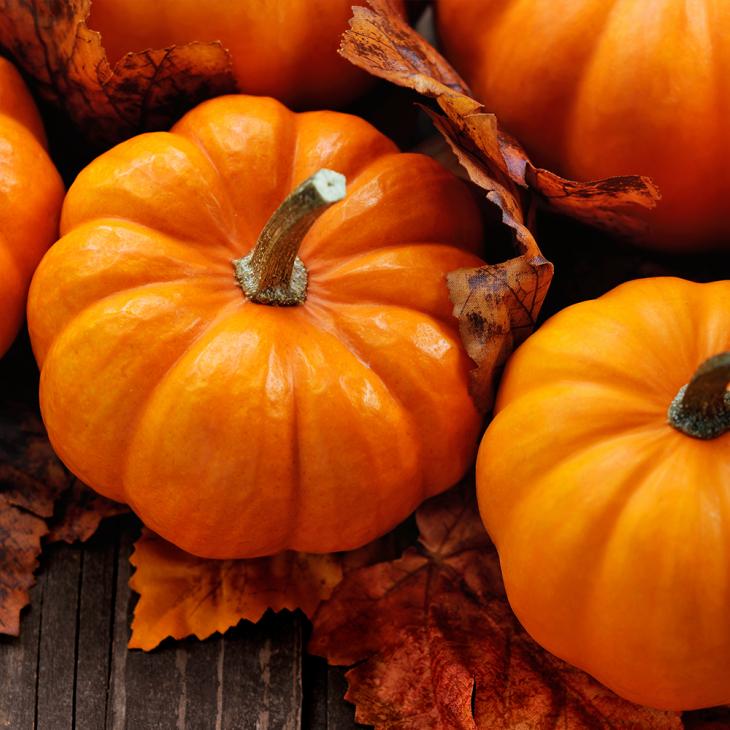Zucca, la vera protagonista di Halloween