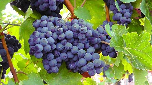 Dolci veloci al vino rosso per un autunno caldo e speziato