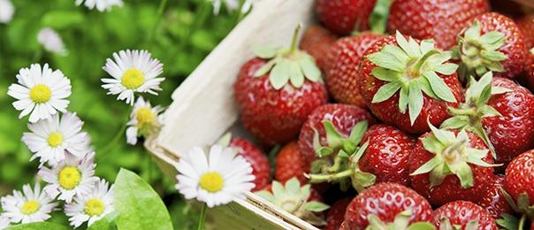 Primavera, fragole e bontà